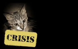Cat and economic crisis Stock Images