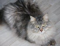Cat Efim Stock Images