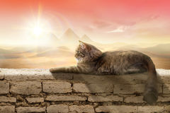 Cat in Egypt. Beautiful cat on wall in desert sunset with pyramids background stock photo