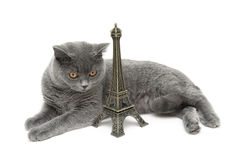 Cat and Eiffel tower figurine isolated on white background Stock Images