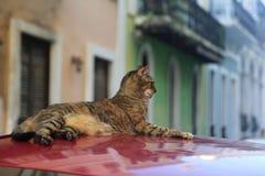 Cat in El viejo San Juan. Cat sitting on top of a car in El Viejo San Juan, Old San Juan, Puerto Rico royalty free stock images