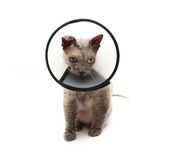 Cat in elizabethan collar looking down Royalty Free Stock Image