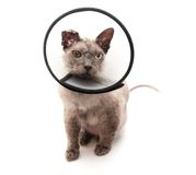 Cat in elizabethan collar on white background Stock Photo