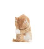 Cat embarrassed stock image