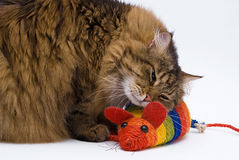 The cat embraces the mouse on the white background Royalty Free Stock Image