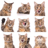 Cat emotions composite Royalty Free Stock Photo