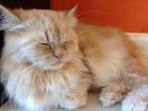 Cat emotions nap Stock Photo