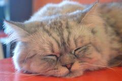 Cat emotions nap Royalty Free Stock Photo