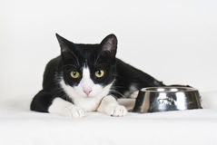 Cat with empty food bowl Stock Photo