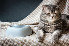 Cat and empty pet food bowl. Stock Photos