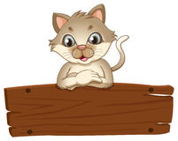 A cat with an empty wooden board Stock Photos