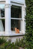 Cat in England Royalty Free Stock Photo