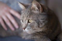 Cat enjoying cuddling Royalty Free Stock Photography