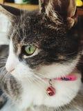 Cat enjoying life stock photography