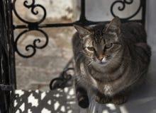 Cat enjoying the shade Stock Photo