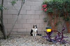 Cat Enjoying Spring Evening royaltyfri bild