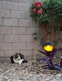 Cat Enjoying Spring Evening royaltyfri foto