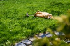 Cat enjoying sun in garden stock images