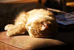 Cat enjoying sunshine. Little orange cat on a hassock asleep in the sunshine royalty free stock images