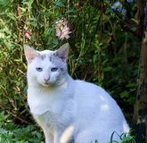 White cat meditates. The cat enjoys a garden surrounded by various plants meditates The plants are around her Stock Photos