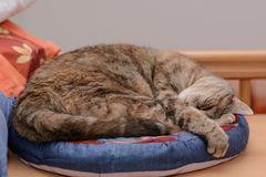 Free Cat Enjoys Lying In The Cat Bed Stock Photography - 90682032