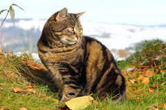 A cat enjoys the sun in the garden. In winter Royalty Free Stock Images