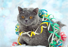 Cat entangled in colorful streamer on the Royalty Free Stock Photos