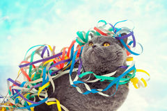 Cat entangled in colorful streamer on the Stock Photography