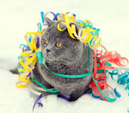 Cat entangled in colorful streamer on the snow Royalty Free Stock Photo