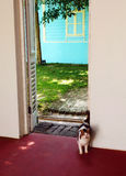 Cat entering door way royalty free stock photography