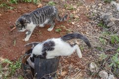 Cat Entering Old Flowerpot royalty-vrije stock foto
