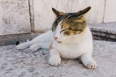 Lazy Cat. A cat in Ephesus Royalty Free Stock Images