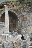 Cat, Ephesus Stock Image