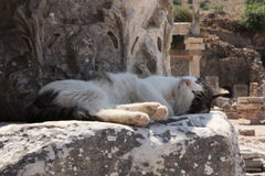 Cat at Ephesus Stock Photography