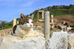 Cat at Ephesus, Turkey Stock Image