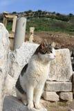 Cat at Ephesus, Turkey Royalty Free Stock Photo