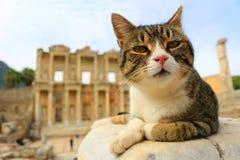 Cat at Ephesus, Turkey Royalty Free Stock Image