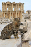 Cat at Ephesus, Turkey Stock Photo