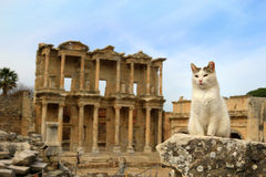 Cat at Ephesus, Turkey. Cat sitting on a pillar in the Ancient City of Ephesus With Celsus  Library in the background Stock Photography