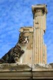 Cat at Ephesus, Turkey Royalty Free Stock Images