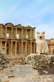Cat at Ephesus, Turkey Stock Photos