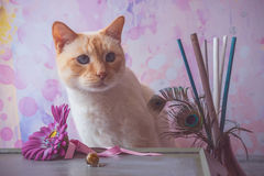 Cat with epoxy resin crystals and fake flower and peacock feathe Stock Photos