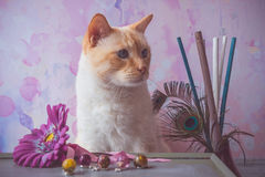 Cat with epoxy resin crystals and fake flower and peacock feathe Royalty Free Stock Photos