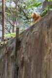 A cat ersting in backyard. Hong Kong Stock Photo