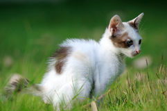 Cat evacuate Royalty Free Stock Image