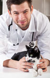 Cat after examination Stock Images