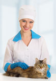 Cat on examination by a veterinarian. Beautiful cat on examination by a veterinarian stock photo