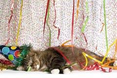 Cat Exhausted van Partij Royalty-vrije Stock Foto's