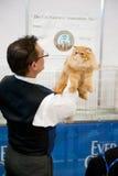 Cat exhibition Stock Image