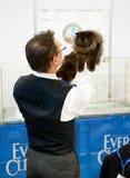 Cat exhibition Royalty Free Stock Photo